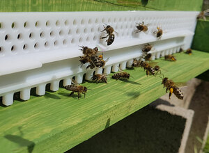 Offener Bienenstock bei Prater-Honig