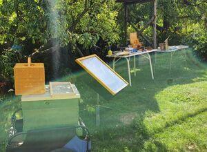 Offener Bienenstock bei Prater-Honig 2021