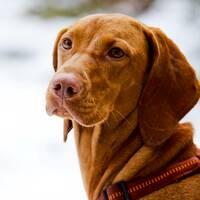 Simply Dog | Hundeschule