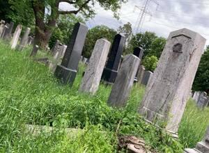 Kräuterspaziergang am Wiener Zentralfriedhof